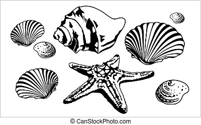 silhouettes, marin, mer, etoile mer, coquilles