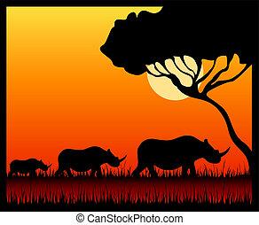 Silhouettes of a rhinoceros against a decline in a safari