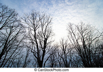 Silhouettes of bare trees against the blue sky with clouds