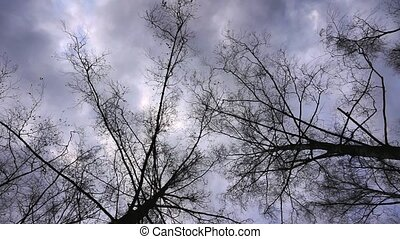 Silhouettes of bare treetop branche over an overcast sky. - ...