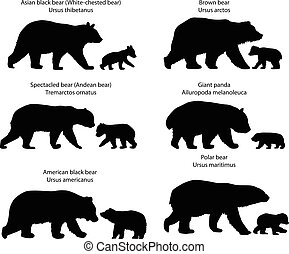 Silhouettes of bears and bear-cubs - Collection of...