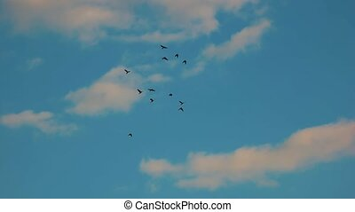 Silhouettes of birds, sky.