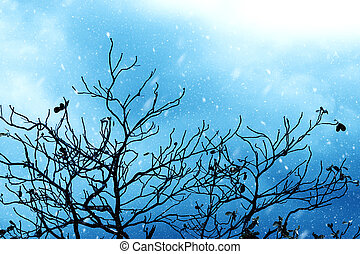 Silhouettes of branch in the winter.