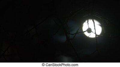 Silhouettes of branches blown by the wind aagainst dark night sky with moon