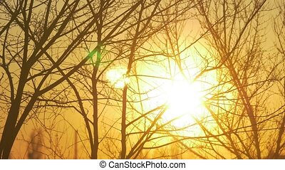 Silhouettes of branches of a tree in the dawn sun Sunrise...