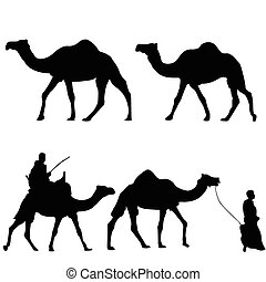Silhouettes of camels