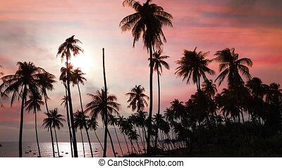 Silhouettes of coconut palm trees