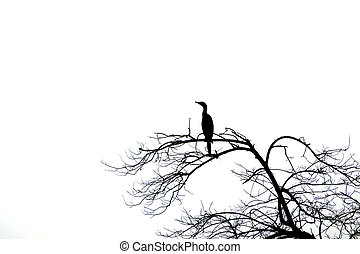 Silhouettes of dead trees and bird.