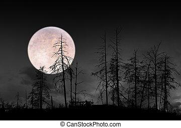 dead trees on dark night with bright full moon