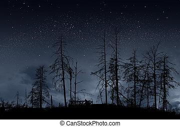 dead trees on dark night with bright stars