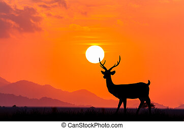 Silhouettes of deer on sky sunset background