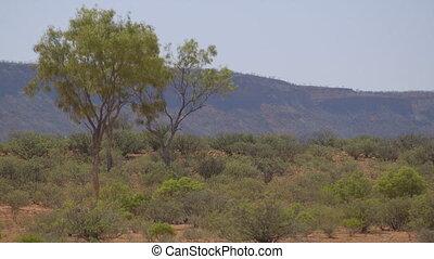 Silhouettes of desert trees, Outback Australia - Medium...
