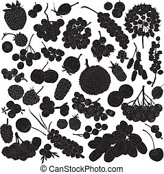 silhouettes of different berries