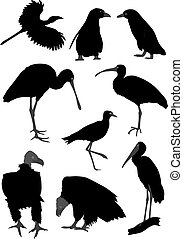 Silhouettes of different birds