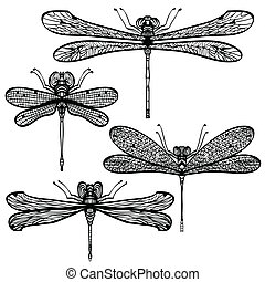 Silhouettes of dragonflies