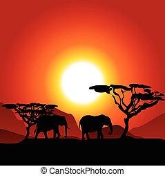 Silhouettes of elephants in savanna