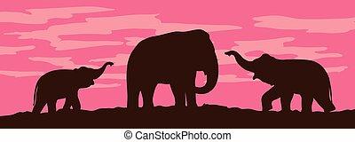 Silhouettes of elephants on sunset background