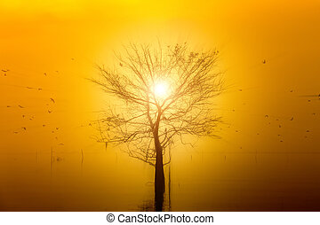 Silhouettes of flying birds, trees and sun.