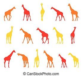 Silhouettes of giraffes.