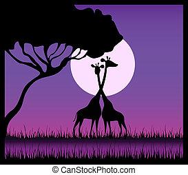 Silhouettes of giraffes against a decline in a safari