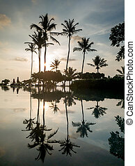Silhouettes of high coconut palms growing on the edge of swimming pool at sunset