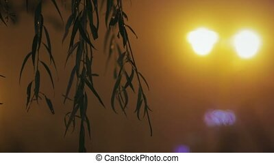 Silhouettes of leaves against the night city lights -...