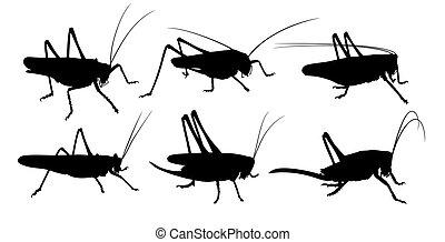 Silhouettes of locust. - Set of silhouettes of a locust.