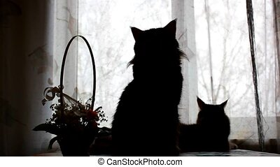 Silhouettes of Maine Coon cats and soap bubbles on the background basket with flowers.