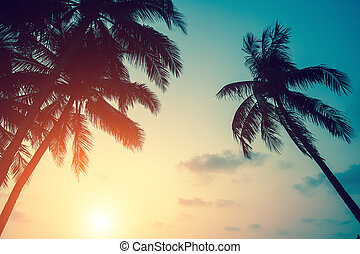 Silhouettes of palm leaves against the setting sky.