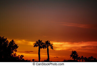 Silhouettes of palm trees against a tropical sunset.
