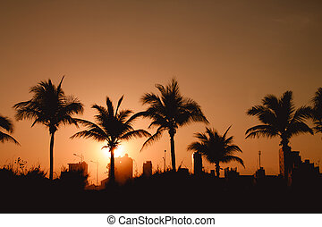 Silhouettes of Palm trees and houses
