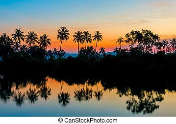 silhouettes of palm trees at dawn near a lake