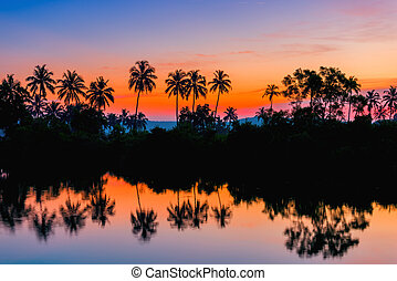 silhouettes of palm trees at dawn near a lake. Tinted.