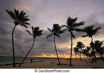 Silhouettes of palm trees on a tropical beach at sunrise
