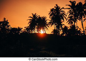 silhouettes of palm trees on red orange sky background