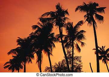 silhouettes of palm trees on the background of an orange warm sky at sunrise