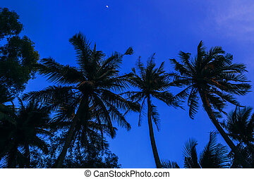 silhouettes of palm trees on the background of blue evening