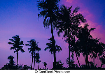 silhouettes of palm trees on the background of blue evening sky with sunset in summer