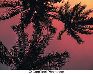 silhouettes of palm trees on the background of orange red evening sky