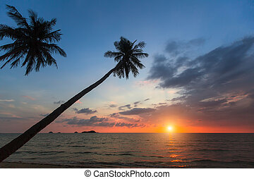 Silhouettes of palm trees on the tropical sea beach