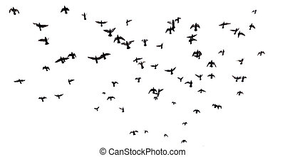 Many birds flying in the sky - Silhouettes of pigeons. Many ...