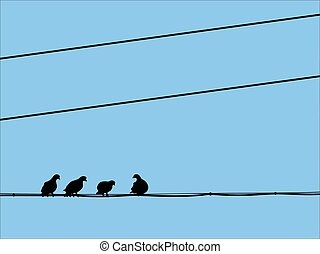 silhouettes of pigeons sitting on the wires
