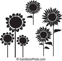 silhouettes of sunflowers vector