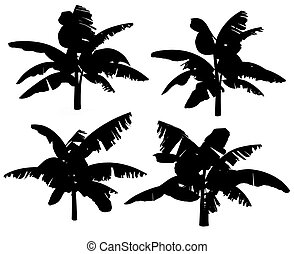 Silhouettes of the banana tree. - Silhouettes of the banana...