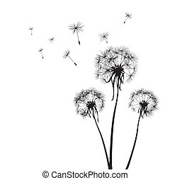 dandelions - silhouettes of three dandelions in the wind