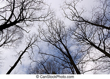 Silhouettes of trees against the dark blue sky