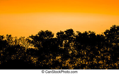 Silhouettes of trees and forest after the sunset