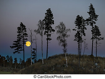 trees at night with full moon