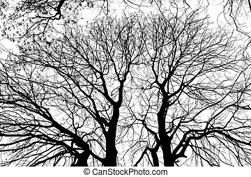 silhouettes of trees branches