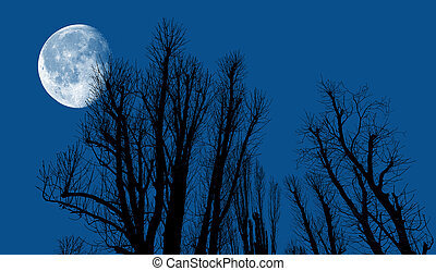 Silhouettes of trees in the evening